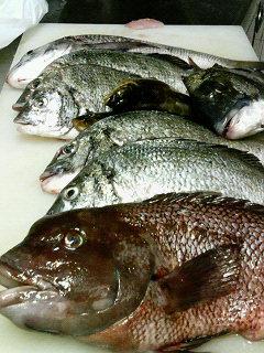 神戸・三釣会様よりいただいた釣果:チヌ・油目・カン鯛