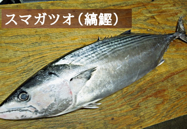 「すま」という名の魚