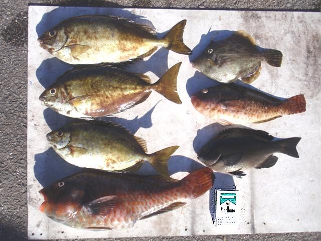 甲浦磯釣りセンター