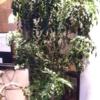 バットの木